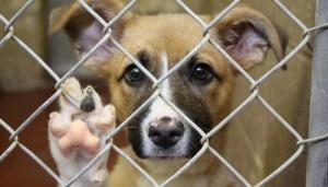 dog-shelter-700x400