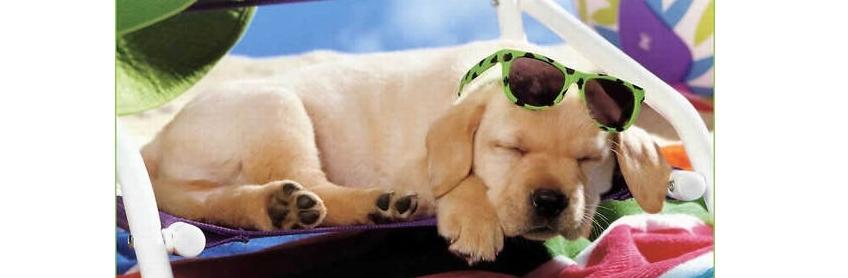 warm weer hond dog's best friend - privé hondentraining